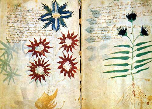 Codigo Voynich